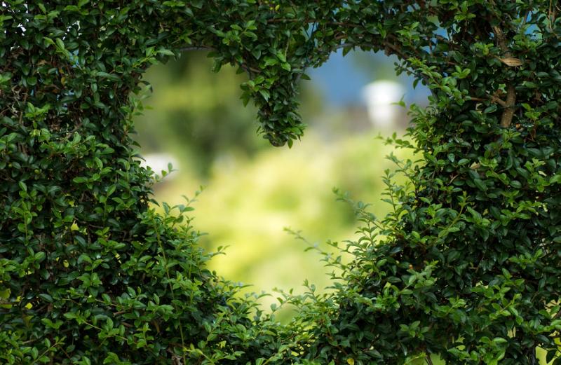 Zielone kampanie społeczne - kwiaty na kwietnikach kontra smog