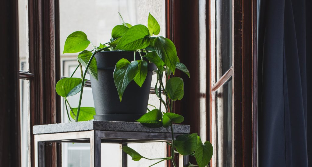 Dlaczego warto trzymać rośliny na stojących kwietnikach