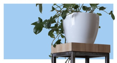 Jan Osłupiały -  sosna grubo krojona to ręcznie wykonany stojak na kwiaty marki Ładne Jany.